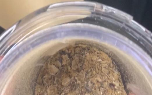 粉砕したカブトムシ